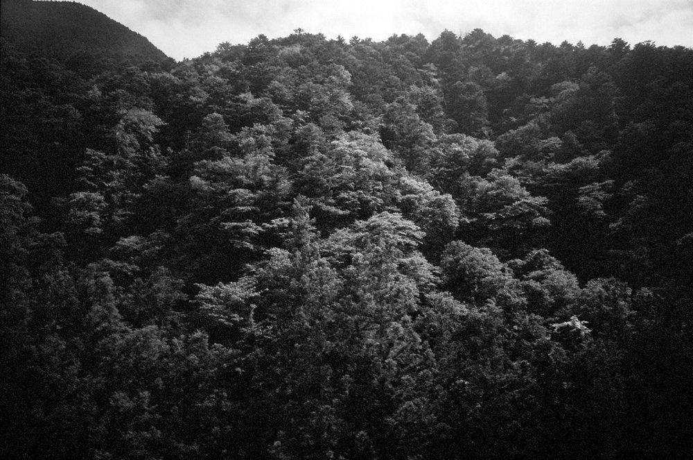 pursuance_0009_bcec9eb8f5c8215f-japantrees.jpg