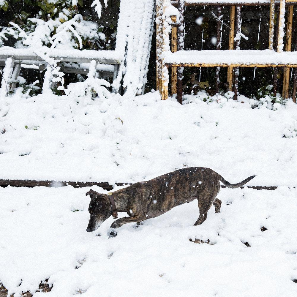 fin_snow.jpg