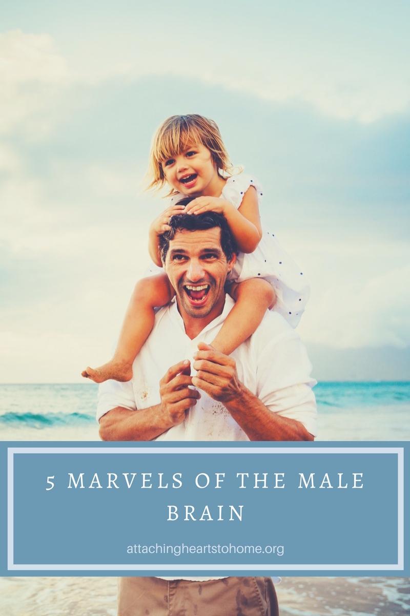 5 marvels of the male Brain.jpg
