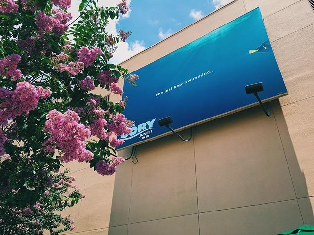 With @pixarcoco being released next week, here's a #tbt of the billboard at Disney's Hollywood Studios for @pixarfindingdory! Are you excited for Coco?! #twentyeightnorth #pixarcoco