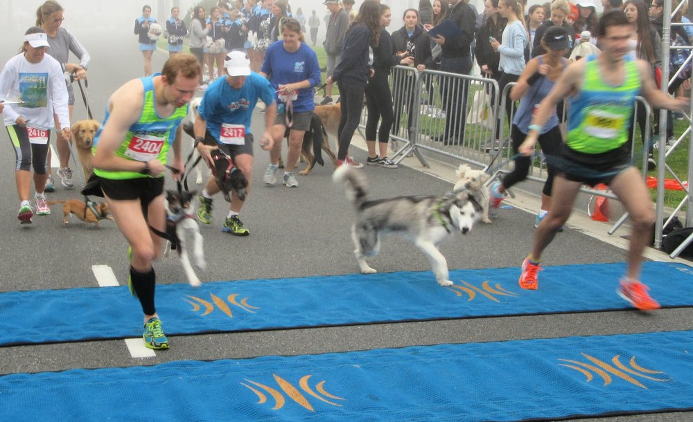 dog mile finish.jpeg