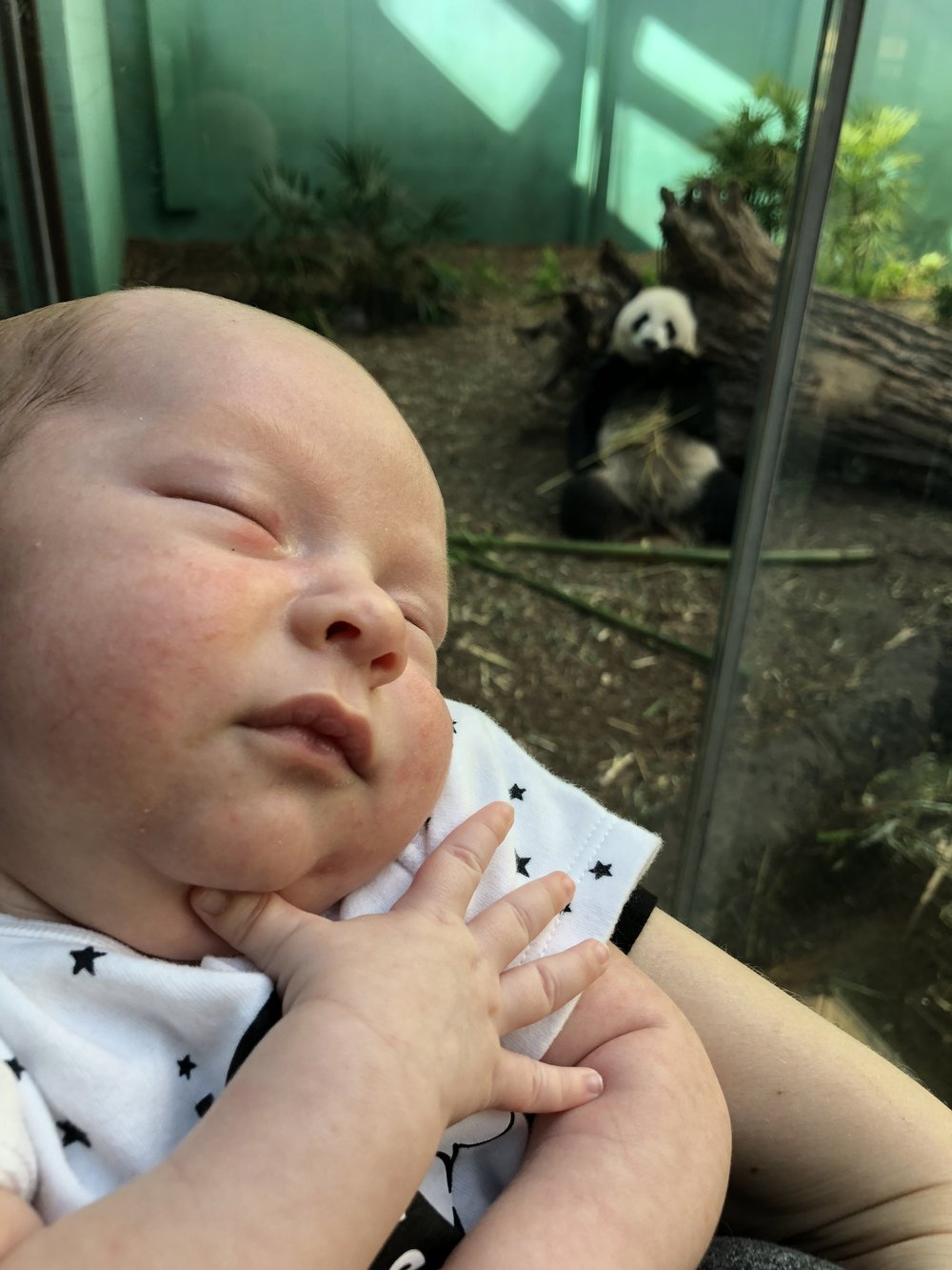 Pandas at the Zoo