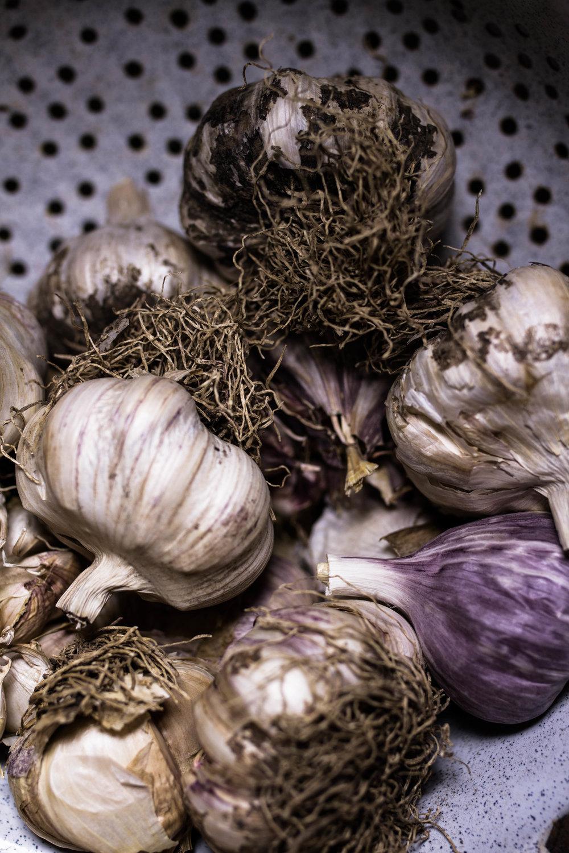 garlic-10.jpg