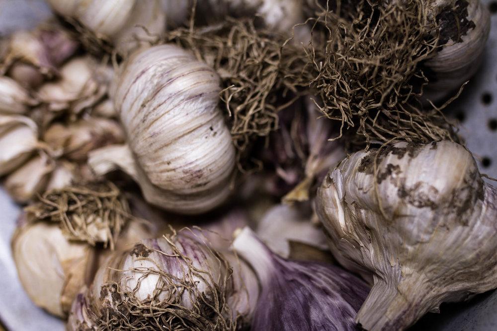 garlic-11.jpg