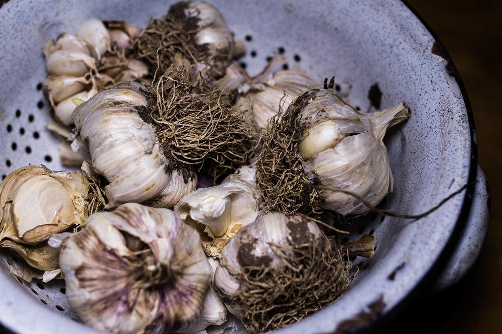 garlic-3.jpg