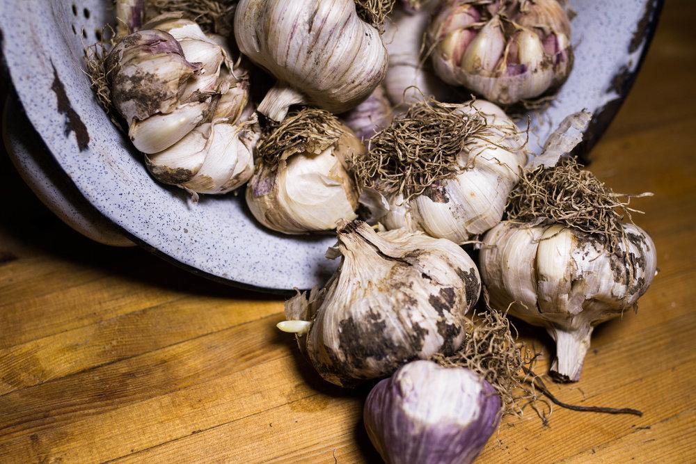garlic-5.jpg