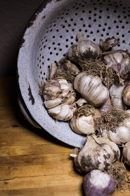 garlic-6.jpg