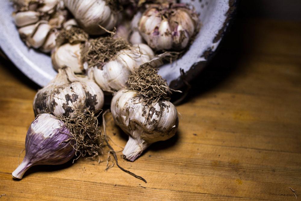 garlic-4.jpg