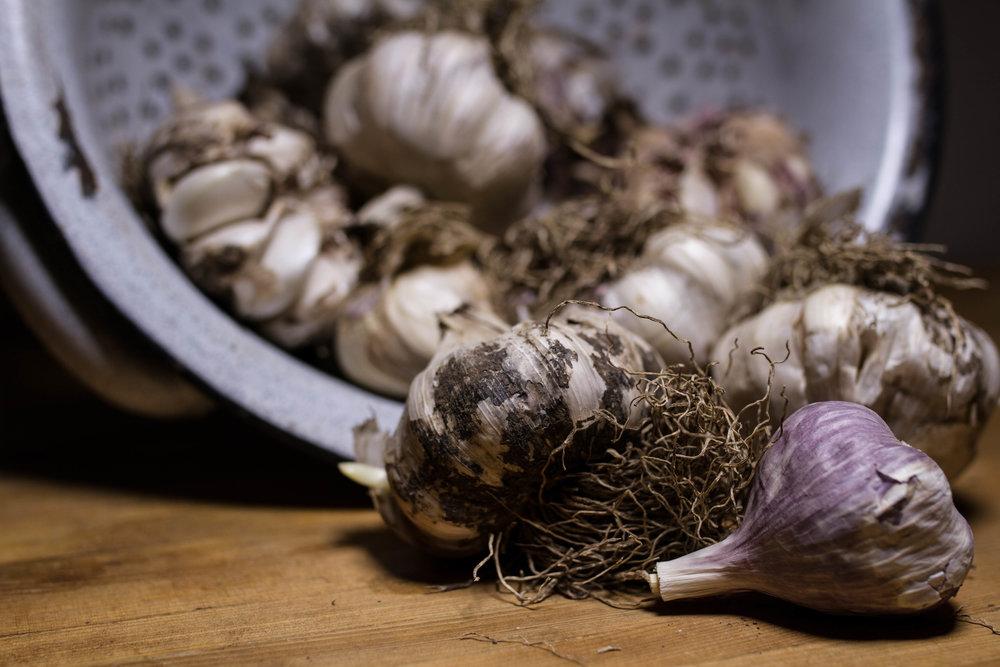 garlic-8.jpg