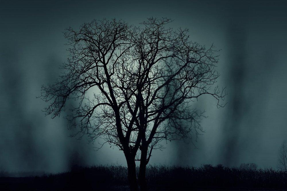 tree-407256_1920.jpg