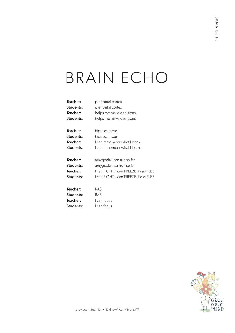 Brain Echo -