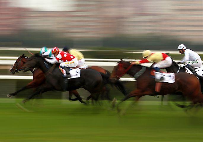 horse-1911382__480.jpg