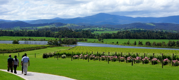 yarra-valley-wine-tours-018.jpg