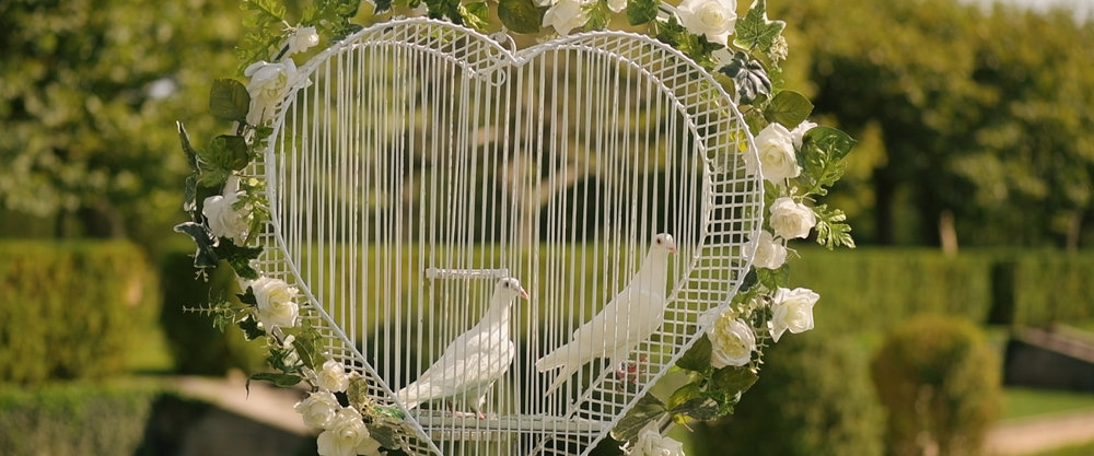 White Doves for Wedding