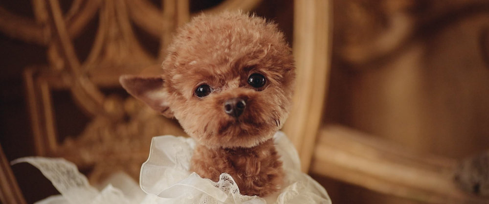 Puppy Wedding Dress