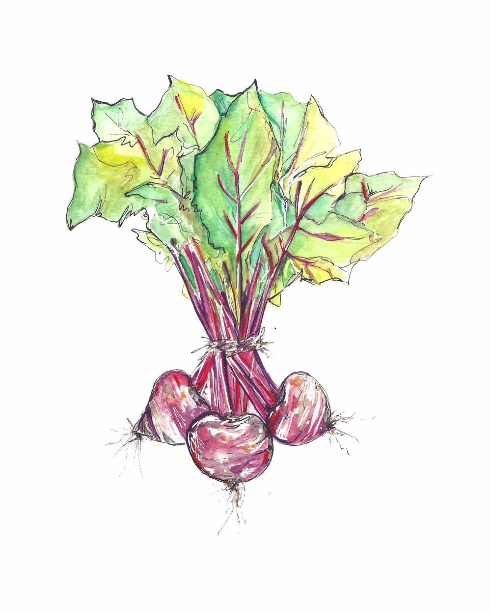 Food — CLAIRE S. WILSON for Drawing Beetroot  51ane