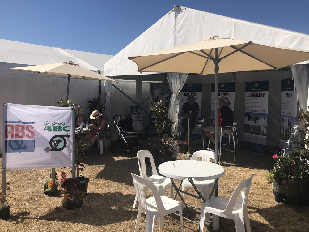 Sungold Filed Days Marquee Hire | Hamilton Marquee Hire