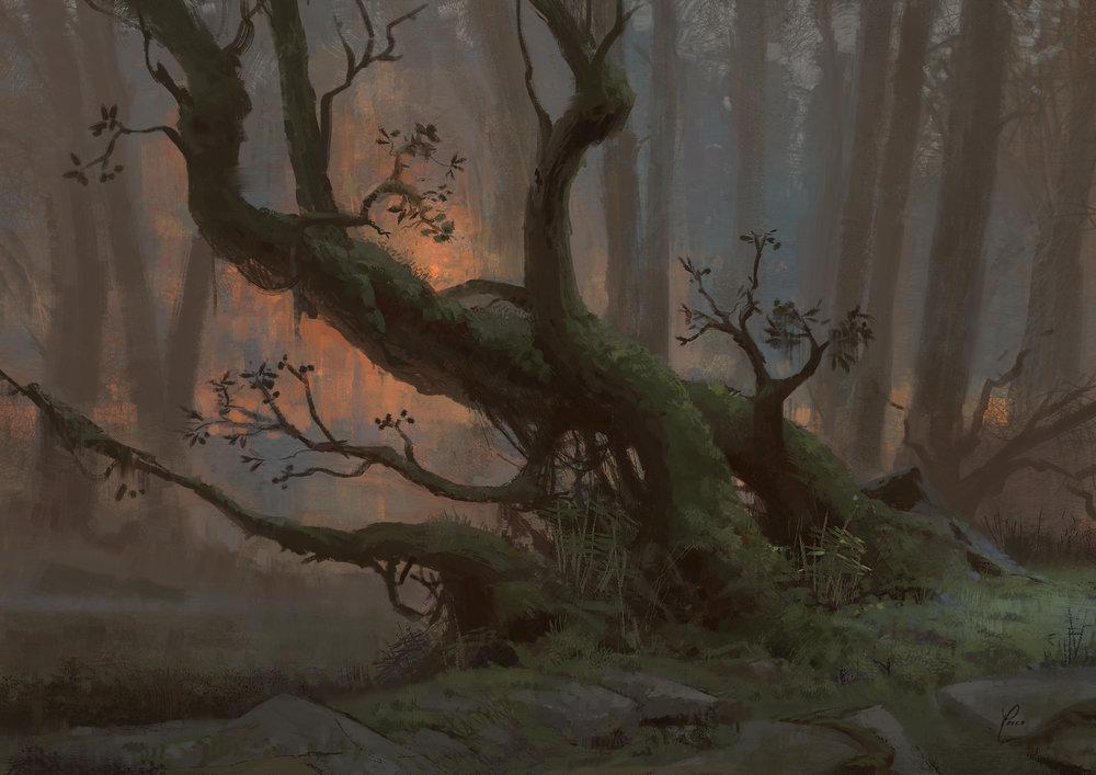 Tree Lapalma.jpg