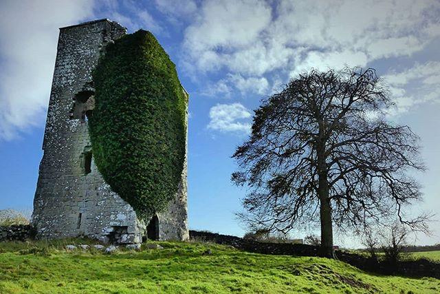 The Tower & The Tree - Ballinduff Castle, County Galway #galway #countygalway #manor_n_castle #churchesandcastles #irishhistory #irishhistoryandheritage #thisisgalway #welovegalway #topgalwayphoto #discovergalway #igersgalway #irelandswildwest