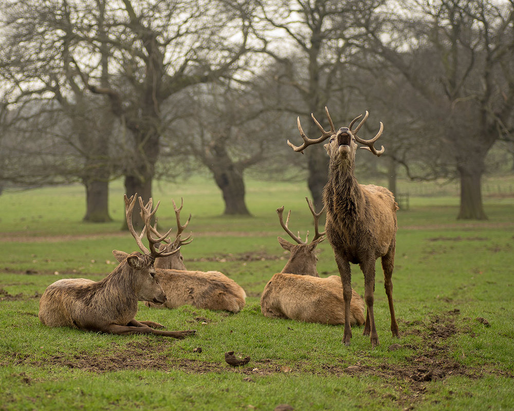 We love the deer roaming free around Wollaton Hall and throughout the deer park