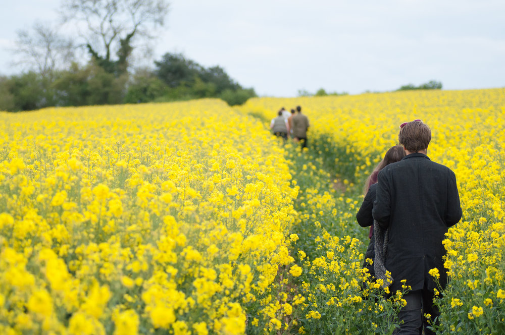 The line this path draws takes you through the colourful rapeseed field, making you feel like you are there
