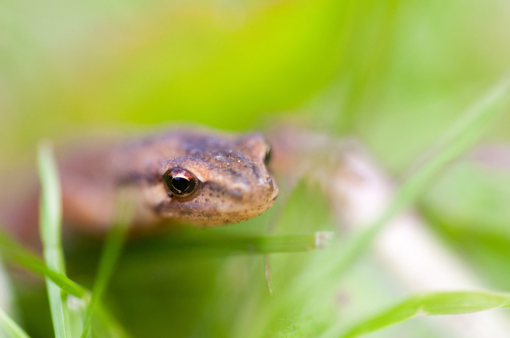 This little fellow was lurking in our garden last spring