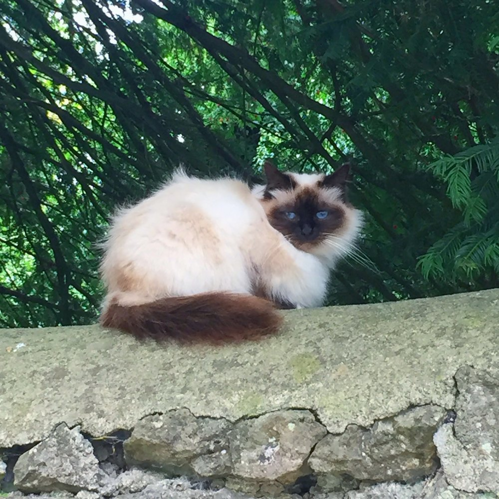 village cat.JPG