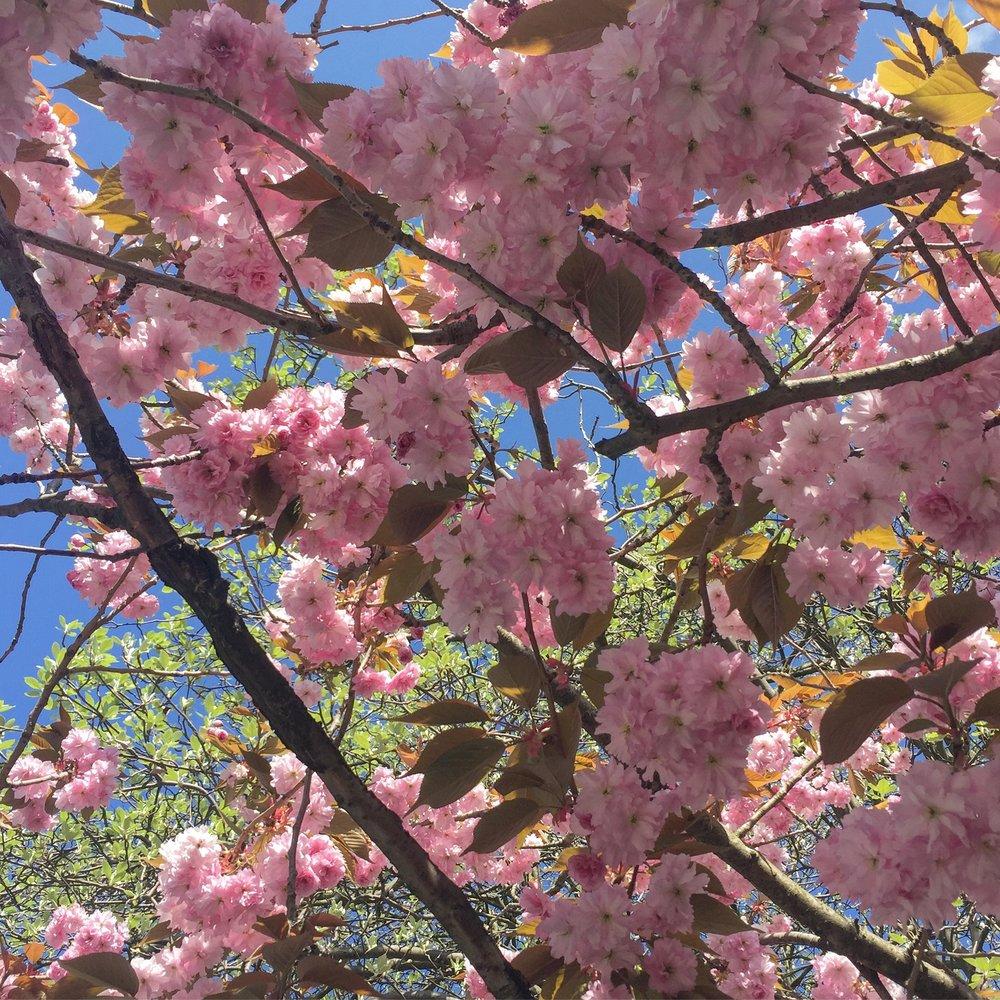 blossom .JPG