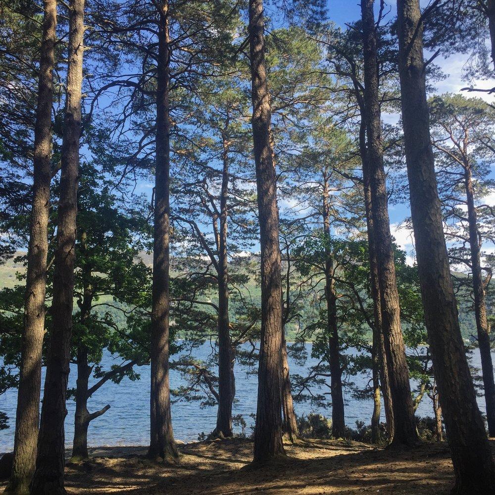 hawse end forest .JPG