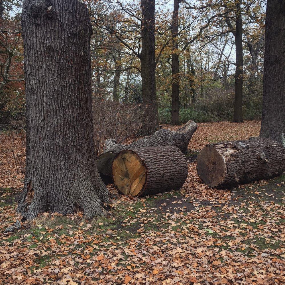 bushy trunk.JPG