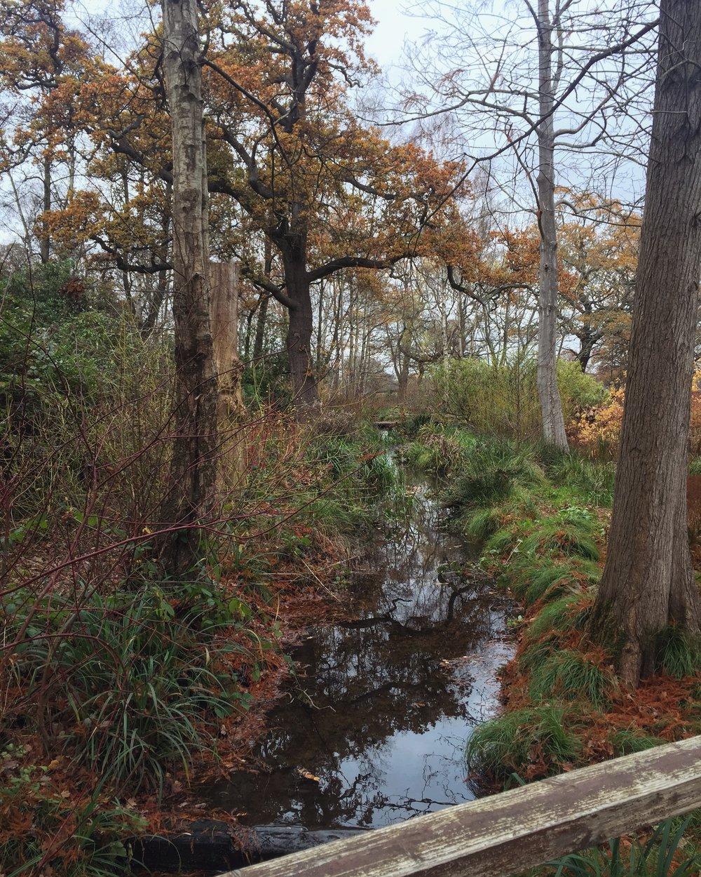 river bushy.JPG