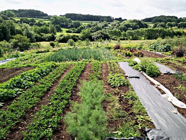 Organic principles