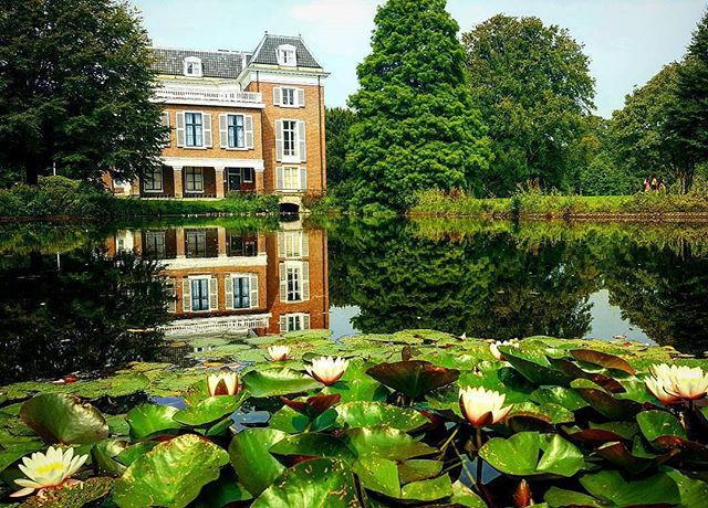The Hague is so green you sometimes forget it's the third biggest city in The Netherlands 📷@herz_charly #thehague #thehaguetourism #dutch #nature #green #estate #holland #netherlands #denhaag #citytrip #exploreeurope #explore #lillies #lakes #summerspot #dutchnature