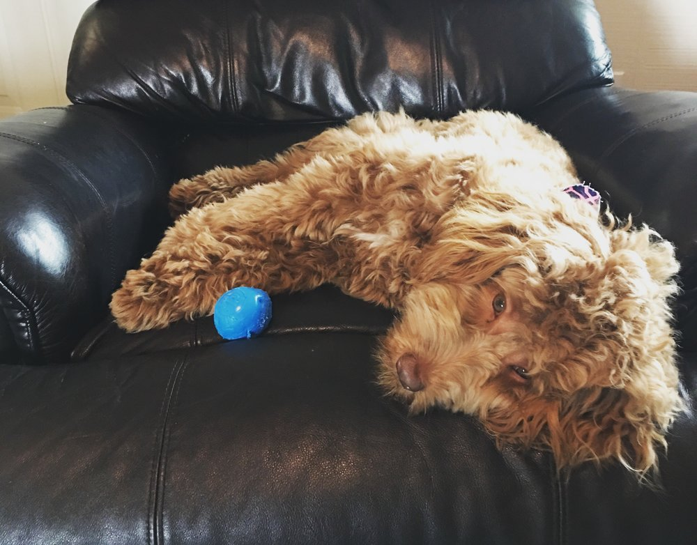 The many naps of Maggie!
