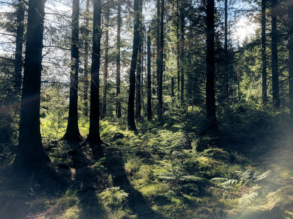 Wales_Landscape0.jpg
