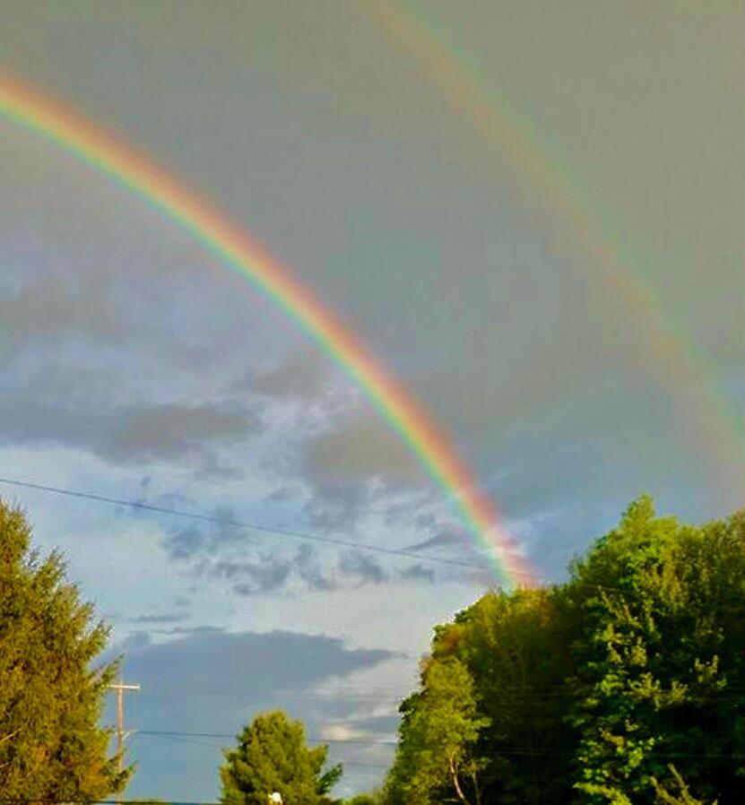 rainbowfin2.jpg
