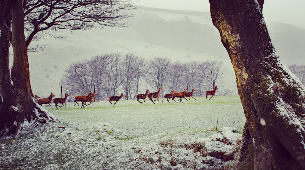 deer-feb-exmoor.jpg
