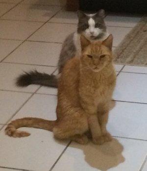 HAB-Cats.jpg