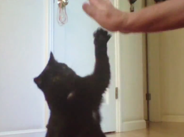 Jeffy High Five.png