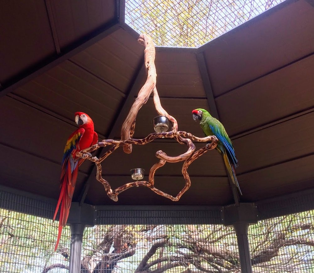 Arie and Mack aviary 1-7-2018.JPG