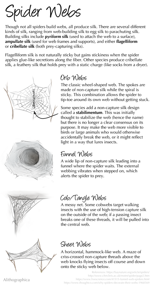 Alithographica Art  ·  August 11, 2018  ·     I'm back! This is a reminder that spiders are complex and cool, even if you don't want them near you.  (You should also google stabilimentum designs. They're pretty wild.)  Support Science Fact Friday on Patreon:   https://www.patreon.com/alithographica