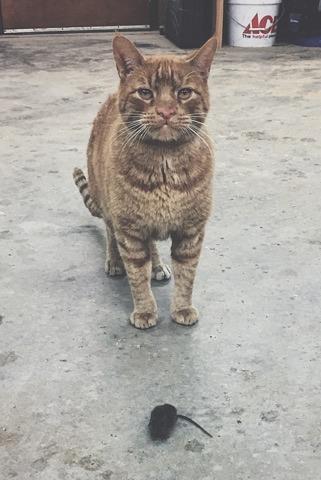 wood shop cat springfield mo