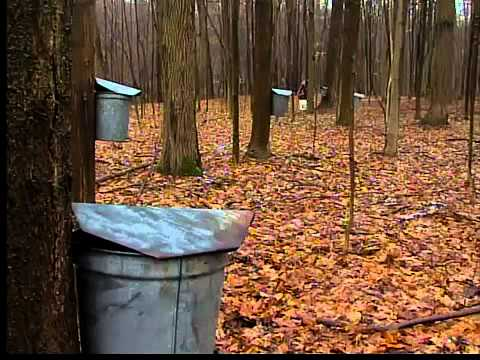 maple syrup pails.jpg