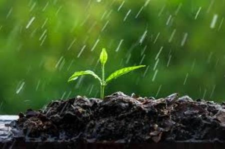 Rain on crops.jpg