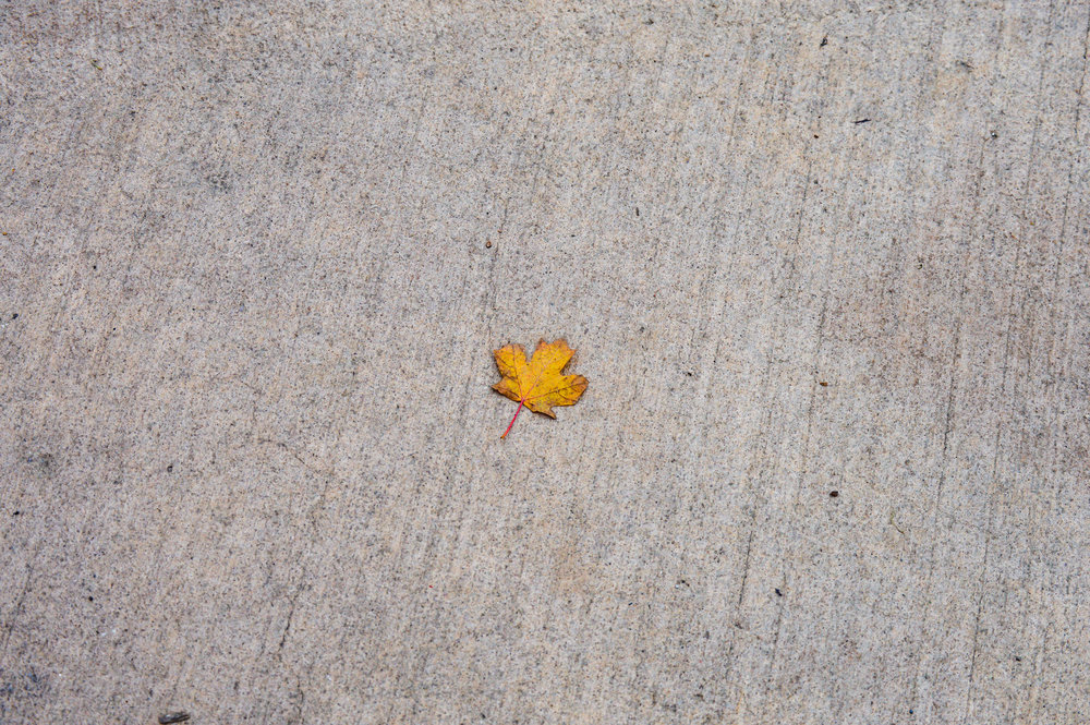 A poor lone leaf in the middle of a sidewalk. Who would have thought such a great image could come from something so simple. I love how the colors just pop when against the grey of the cement. Amazing eye Talia!