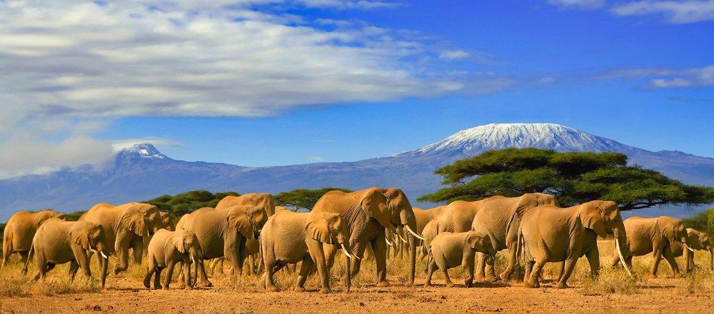 Kilimanjaro HikeTanzania -
