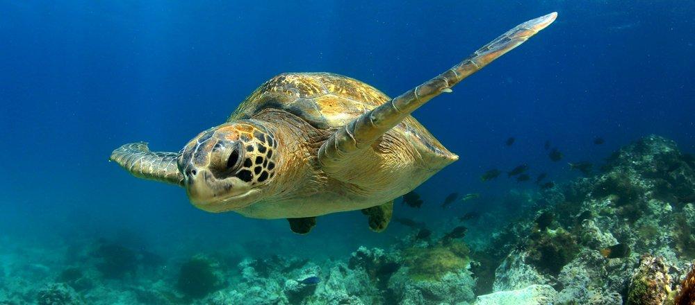 Land+SeaGalapagos -