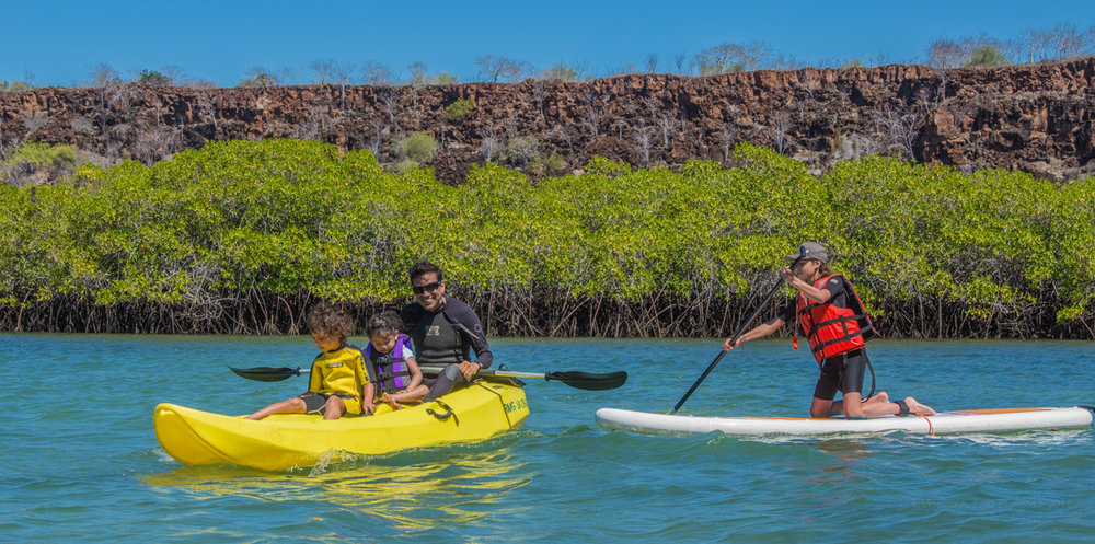 Kayaking in the Galapagos offers endless opportunities for wildlife viewing.    Meals: B | L    Flights:  Quito to Baltra (stop in Guayaquil)