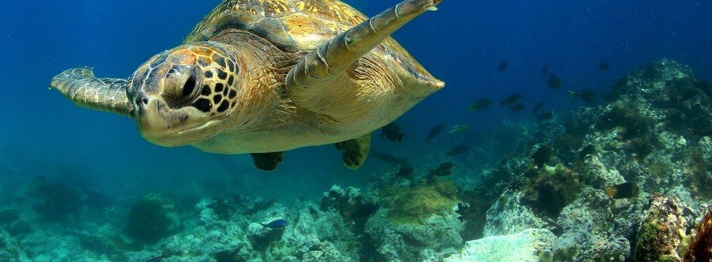 Galapagos Family Adventure -