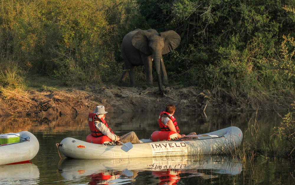 63 - Imvelo Safari Lodges - Zam Sands - Canoeing with the elephants.jpg